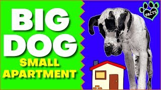 Top 7 Large Dog Breeds For Small Apartments and Tiny Homes