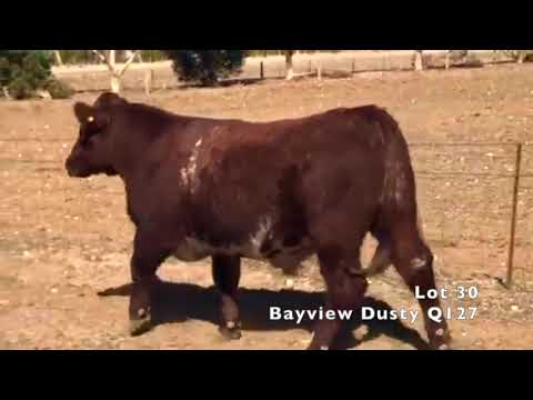 BAYVIEW DUSTY Q127