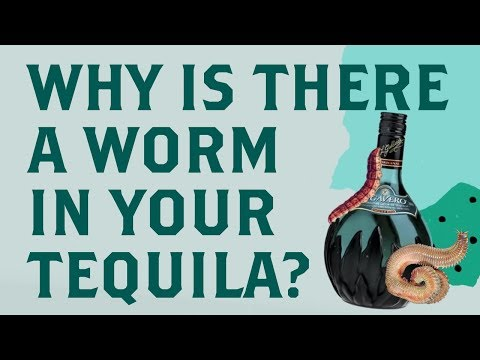 Why There is a Worm in Your Tequila