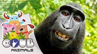 Смешные видео про животных #6 | Приколы с животными