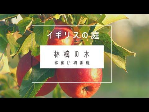 , title : '【DIY】イギリスにて樹齢10年以上の林檎の木を自力で移植してみた