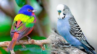 The Most Popular PET BIRD Breeds 🐦