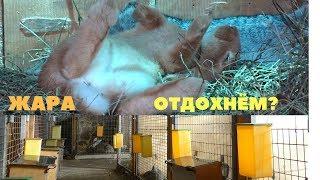 Вольер для кроликов открытого и закрытого типа / Летнее и зимнее содержание