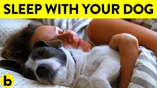 13 Health Benefits Of Letting Your Dog Sleep On Your Bed