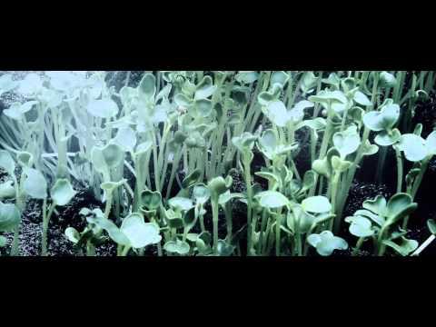 FLIGHT (KAIRO KINGDOM REMIX VIDEO EDIT)