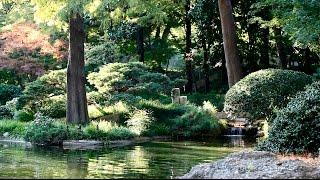 Musica Relajante, Calmar la Mente, Música Zen, Relajación Dormir