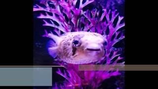 Pablow, the blowfish- Miley Cyrus