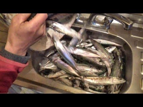 Die Würmer beim Meerfisch