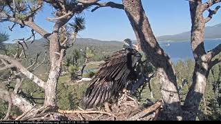 Big Bear Eagles * SIMBA LOSES IT ON MOM!! * There's Gotta Be Fish Here!! * Shadow Saves the Day!! *