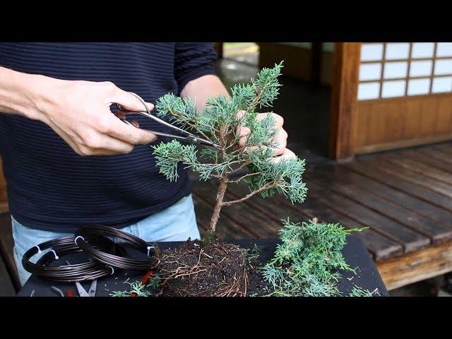 Video Aussprache von Tree in Englisch