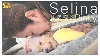 Selina含淚吻別Pinky 「女兒」辭世「拒放黑白照」