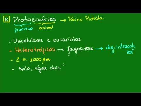 Características gerais dos Protozoários - Diversidade dos Seres Vivos - Biologia