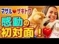 【海外の反応】衝撃!秋田犬「マサル」ザギトワ選手と感動の初対面!モコモコ・ふわふわの「マサル」がかわいすぎ!