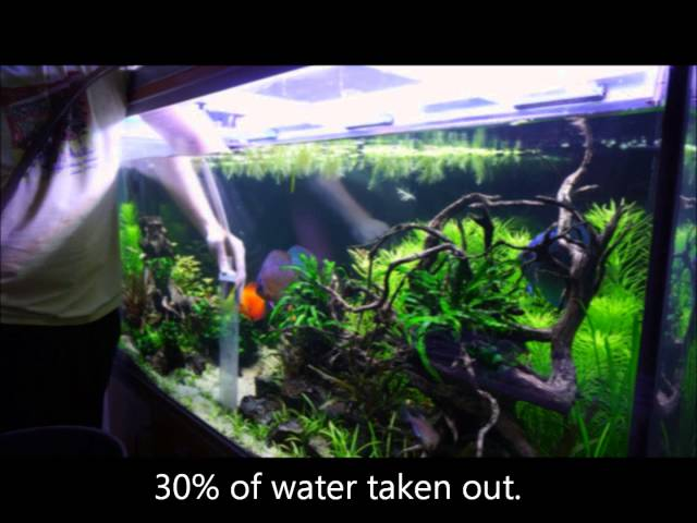 Weekly Sunday maintenance on my discus planted tank.