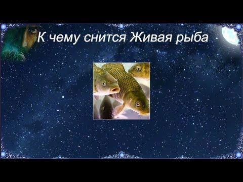 К чему снится Живая рыба (Сонник)