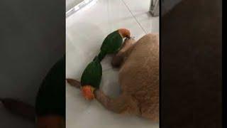 Dog Has Had Enough of His Birdie Massage    ViralHog   Kholo.pk