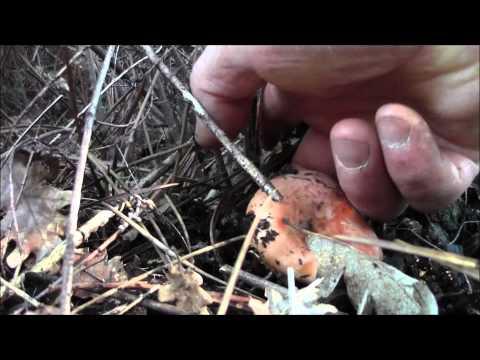 Come liberarsi da un fungo che sta per mezzo di carbonato di sodio