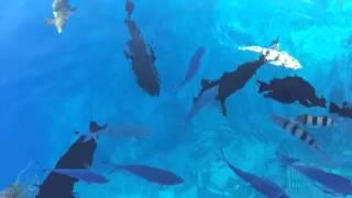 Прикол.. кормим рыб в Египте...)) с пантона красное море Шарм Эль Шейх