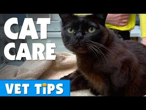 Tips for looking after your cat | Bondi Vet