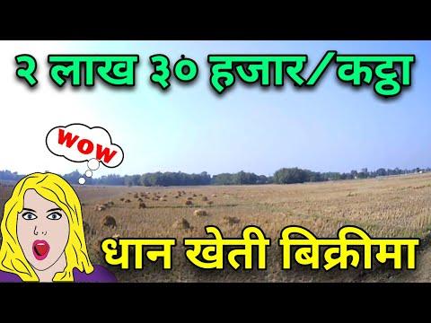 राम्रो ठाउँमा सस्तो खेत बिक्रीमा || sasto ra ramro khet at sitpur nepal