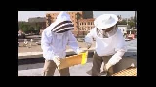 Urban Rooftop Beekeeping