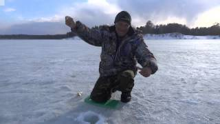 Клев рыбы озеро петровское алтайский край