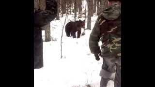 Встреча с медведем в тайге (Карелия, май 2015)
