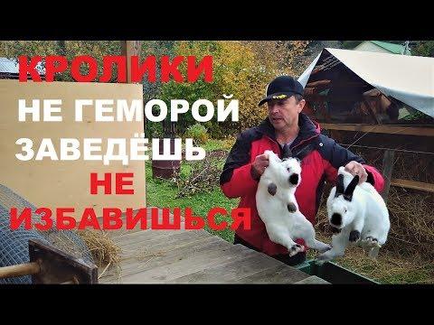 , title : 'Разведение КРОЛИКОВ с чего начать % ЛИЧНЫЙ ОПЫТ