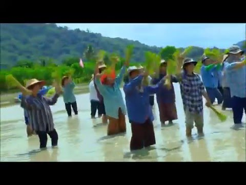 Hmong Music - Zos Toj Siab
