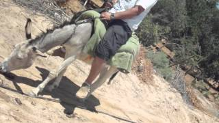 Azraq - Jordan, Donkey ride