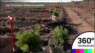 """Жители Подмосковья готовятся к акции """"Наш лес. Посади свое дерево"""""""