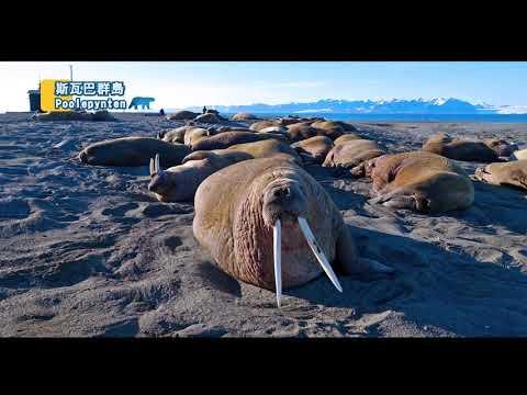 北極80度 北極熊的故鄉 斯瓦巴群島 10日 LYR10A
