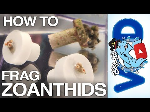 How To Frag Zoanthid Coral (Video)