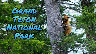 Grand Teton National Park - A Couple Of Perfect Days