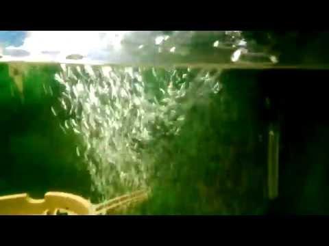 Oxigeno para el acuario. (burbujas de aire)
