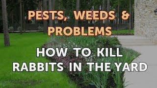 How to Kill Rabbits in the Yard