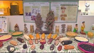 D Todo - Biogenética del maíz y el trigo
