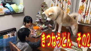 秋田犬ときつねうどん踊りその2 ハスキー犬 シェパード犬も登場
