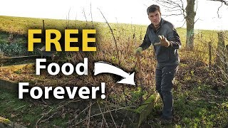 How ONE PLANT Can Give You FREE FOOD Forever! (And Plenty of it!)