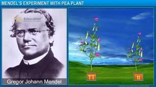 CBSE X Heredity and Evolution - Mendel's Experiments with Pea Plants