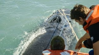 Thumbnail for Sea Shepherd Crew Save Humpback Whale Entangled in Illegal Gillnet