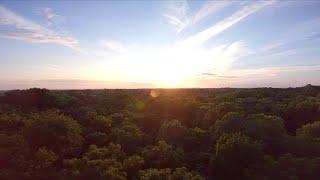 Tree Surfing At Sunset - DJI HD FPV