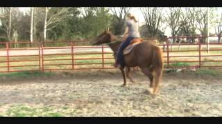 "Appendix Horse for Sale- ""Sassy"""