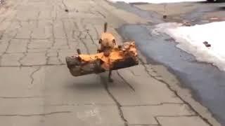 Дикий ржач Приколы 2018