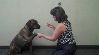 """Teaching Your Dog to """"Give Paw"""""""