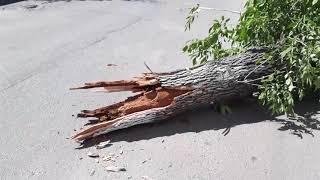 В Рязани дерево упало на проезжую часть
