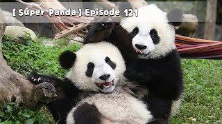 【Super Panda】Episode 121 | iPanda