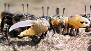 Evolution - Part 2 Of 7 - Great Transformations (PBS Documentary)[HD 720p]