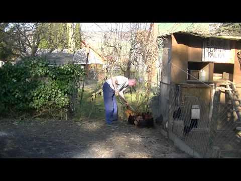 Féregellenőrzés sertésekben