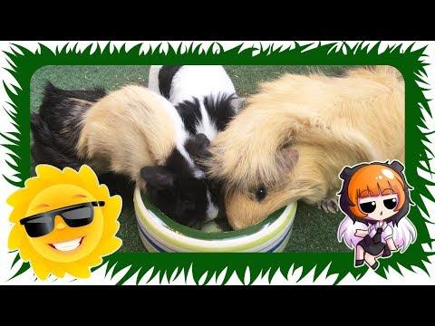 Rojal kanin für die Hunde mit dem Übergewicht
